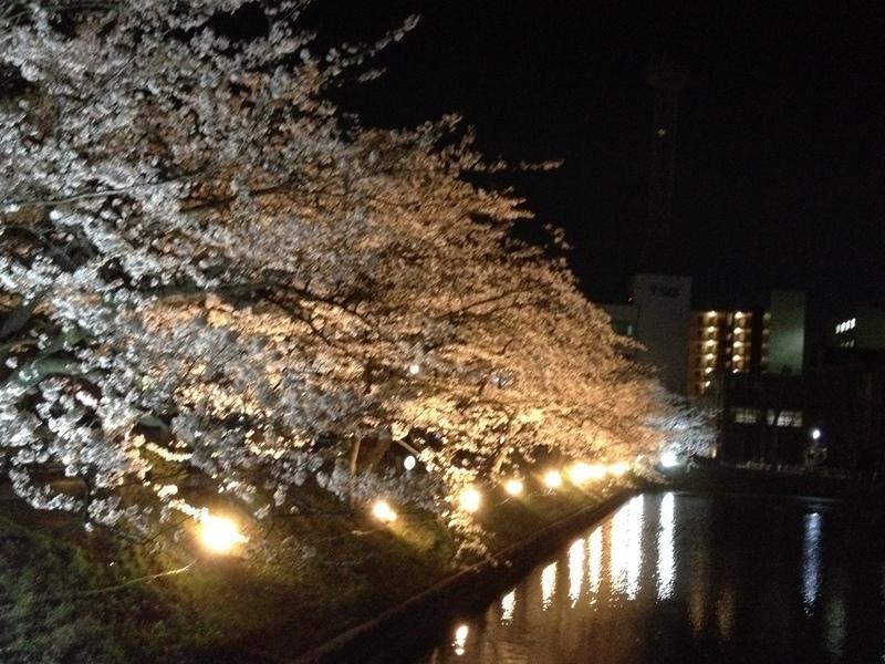 第12回 国宝松本城桜並木 光の回廊 延長になりました!
