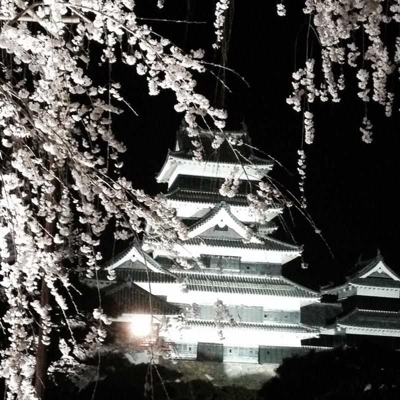 国宝松本城「夜桜会」について